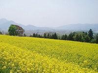 菜の花の丘 2