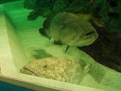 謎の巨大魚